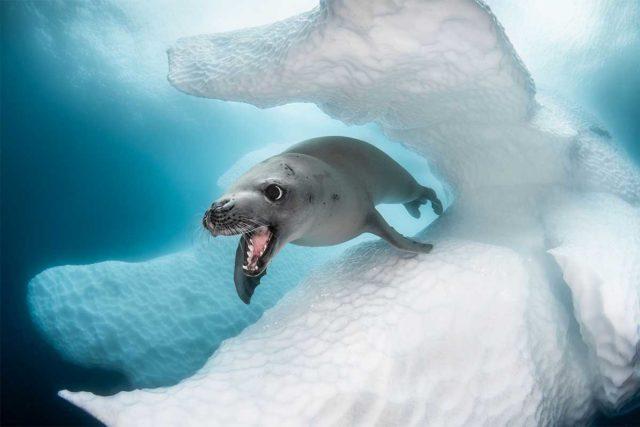 Las imponentes fotos ganadoras del concurso de fotografía oceánica
