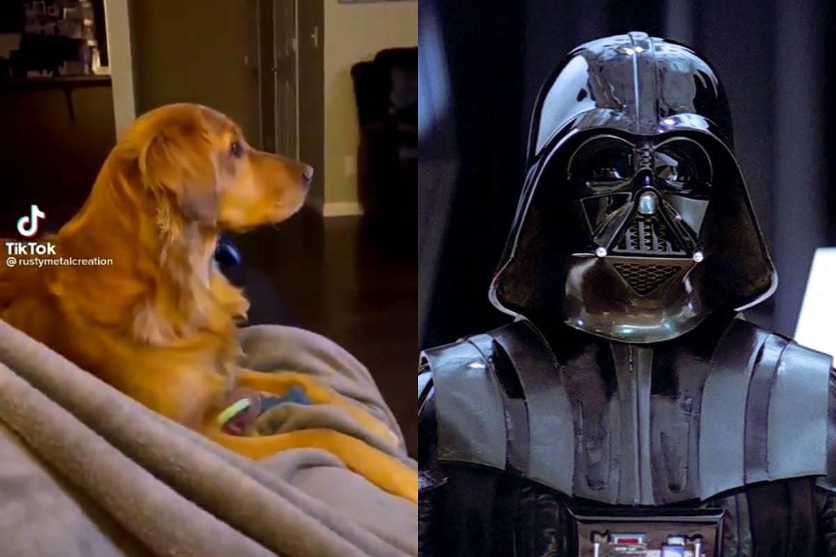 Star Wars: Un perro se vuelve viral por asustarse con Darth Vader